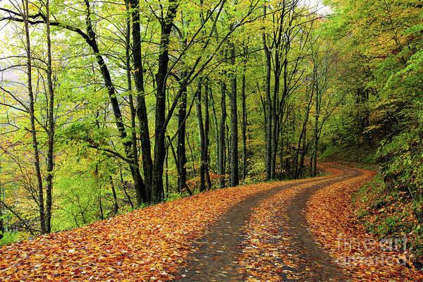 Wall Art - Photograph - Tracks Thru Autumn by Dan Carmichael
