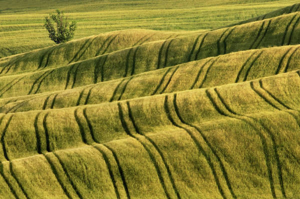 Photograph - Tractor Tracks by Michele Berti