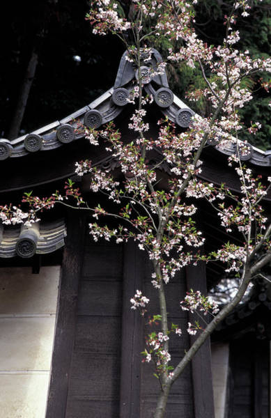 Jim Temple Photograph - Traditional Architecture With Cherry by Jim Holmes
