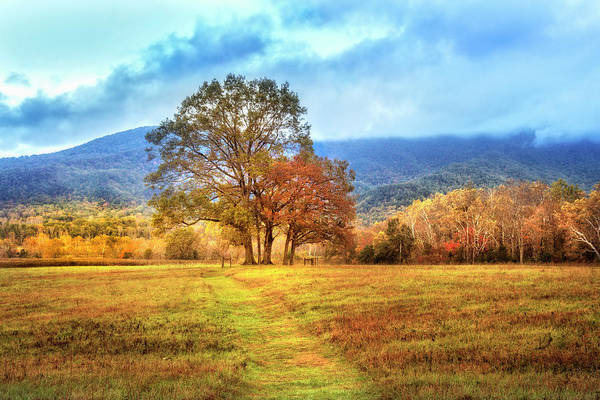 Wall Art - Photograph - Trail In Autumn At Cades Cove by Debra and Dave Vanderlaan