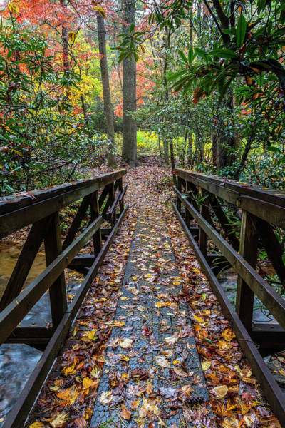 Photograph - Trail In Autumn Leaves by Debra and Dave Vanderlaan