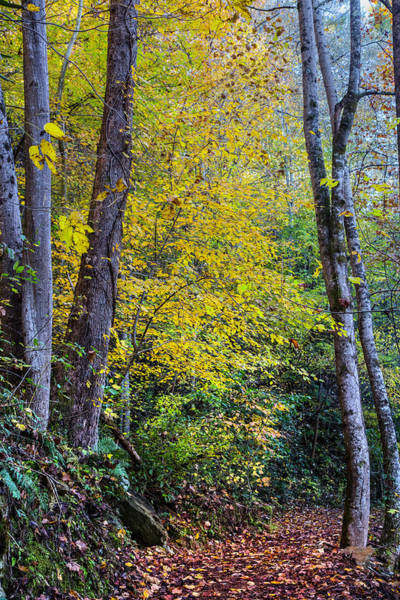 Photograph - Trail Into Autumn Golds by Debra and Dave Vanderlaan