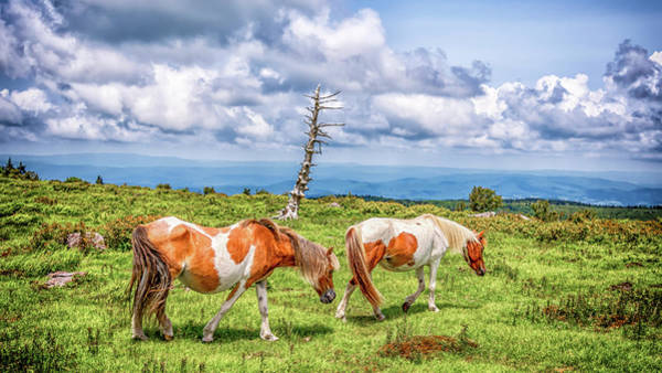 Photograph - Trail Of Ponies by Chris Coffee