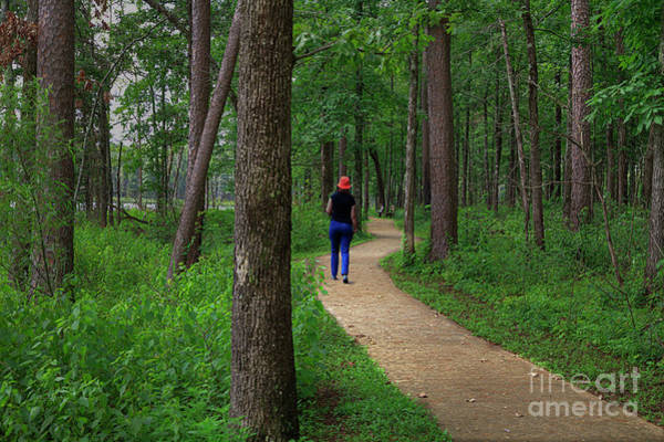Wall Art - Photograph - Trail Of The Lonesome Pines by Larry Braun