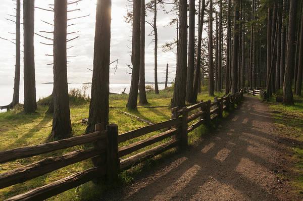 Vancouver Island Photograph - Trail Through Coastal Woodlands by John Elk Iii