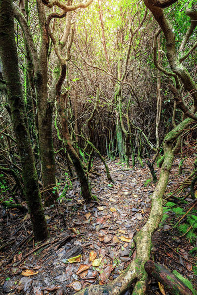 Wall Art - Photograph - Trail Through The Cloud Forest by Alexey Stiop