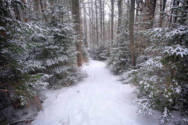 Hemlock Photograph - Trail Through The Snowy Forest by Rick Berk