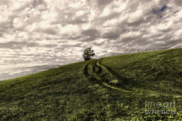 Wall Art - Photograph - Trail To A Tree by Jeff Swan