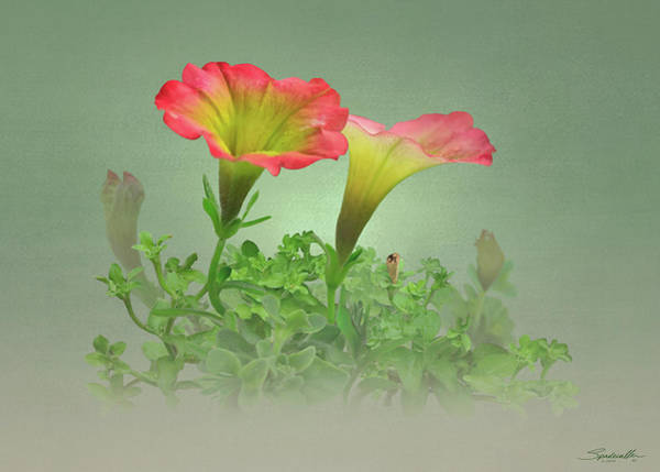Wall Art - Digital Art - Trailing Petunia by Spadecaller