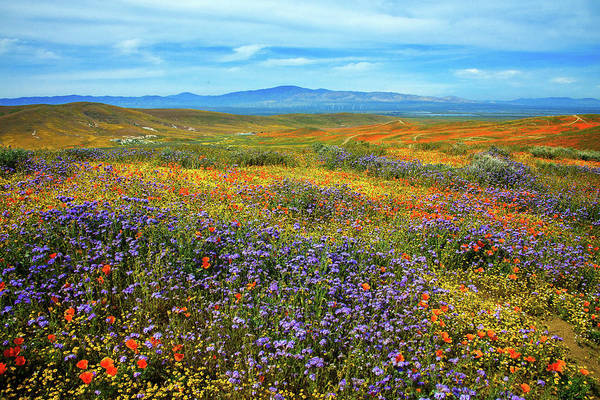 Photograph - Trails Through Oz - Superbloom 2019 by Lynn Bauer