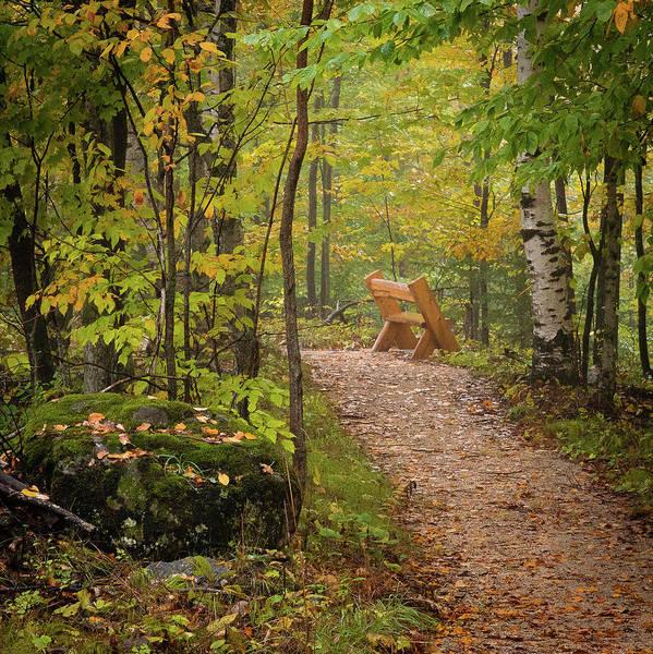 Photograph - Trailside by David Heilman