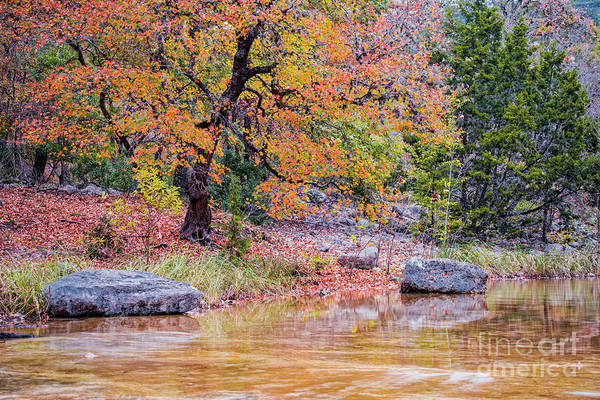 Photograph - Tranquil Fall Scene At Lost Maples State Natural Area - Autumn In The Texas Hill Country by Silvio Ligutti