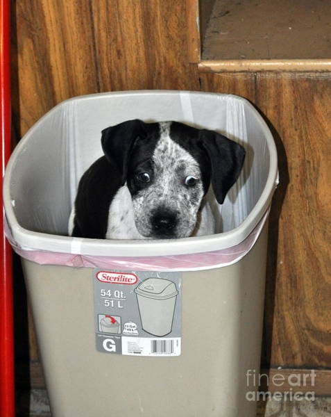 Wall Art - Photograph - Trash Dog by Christopher Hawkins
