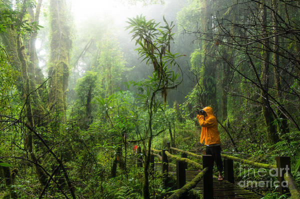Rain Forest Wall Art - Photograph - Traveller Taking Photo At Beautiful by Tzido Sun