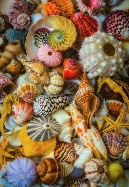 Photograph - Treasures From The Sea by Garry Gay