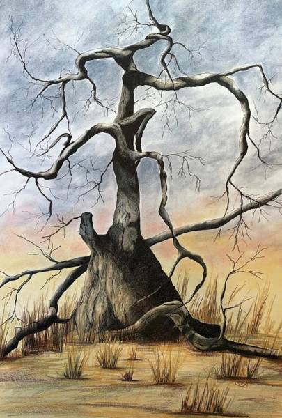 Drawing - Tree 1 by Mary Rimmell