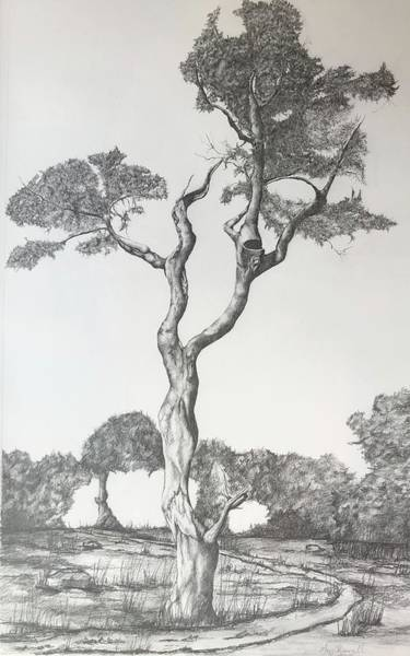 Drawing - Tree 2 Of 1 by Mary Rimmell