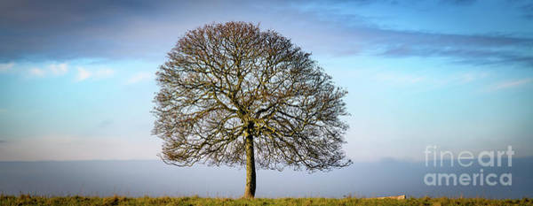 Photograph - Tree Against Skyline by Colin Rayner