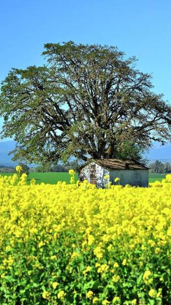 Photograph - Tree And Pumphouse In Field by Jerry Sodorff
