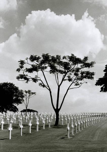 Photograph - Tree And Sacrifice by Shaun Higson