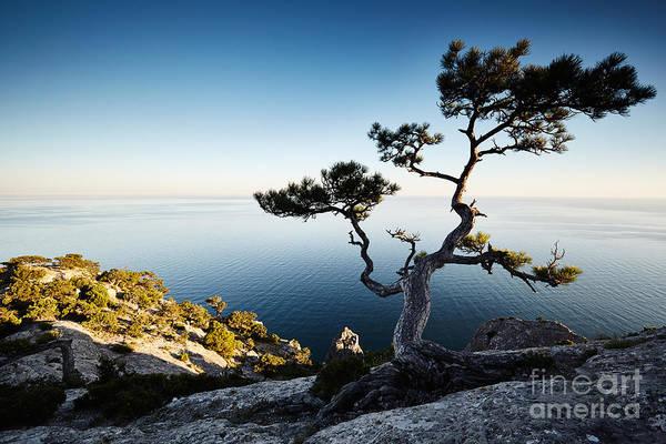Wall Art - Photograph - Tree And Sea At Sunset. Crimea by Oleg Gekman