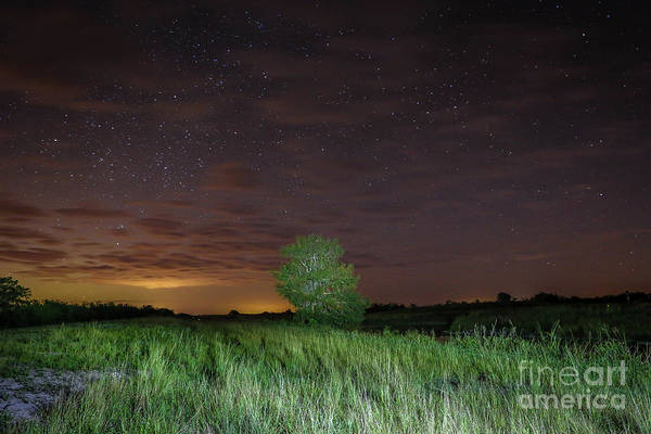 Photograph - Tree And Starry Night by Tom Claud