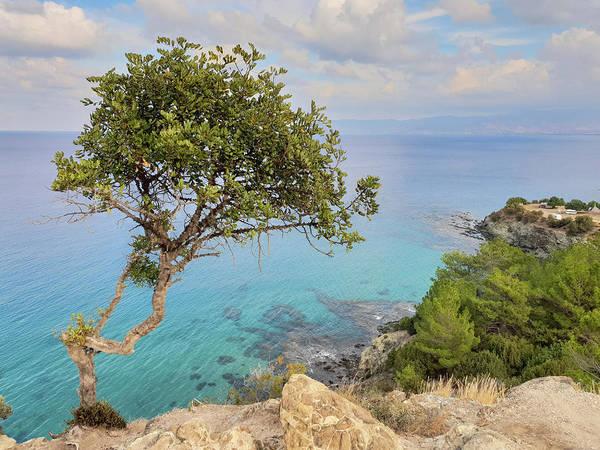 Nature Wall Art - Photograph - Tree And The Sea 2 by Iordanis Pallikaras