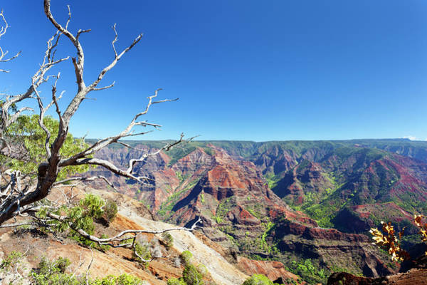 Waimea Canyon Photograph - Tree And Waimea Canyon, Kauai by Michaelutech