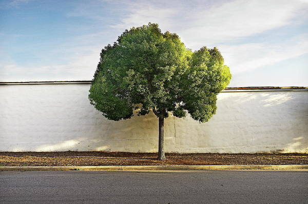 Glendale Wall Art - Photograph - Tree And Wall by Copyright Jeff Seltzer Photography