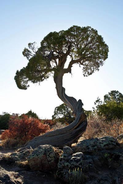 Photograph - Tree At Black Canyon by Robert Woodward