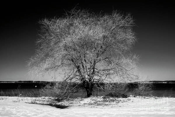 Photograph - Tree At Oceans Edge by Alana Ranney