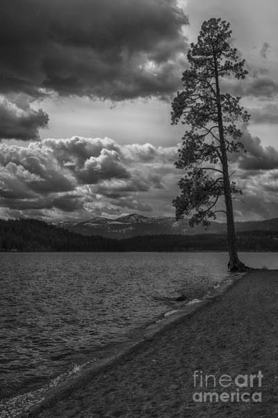 Photograph - Tree At The Edge Of Lake Cda by Matthew Nelson