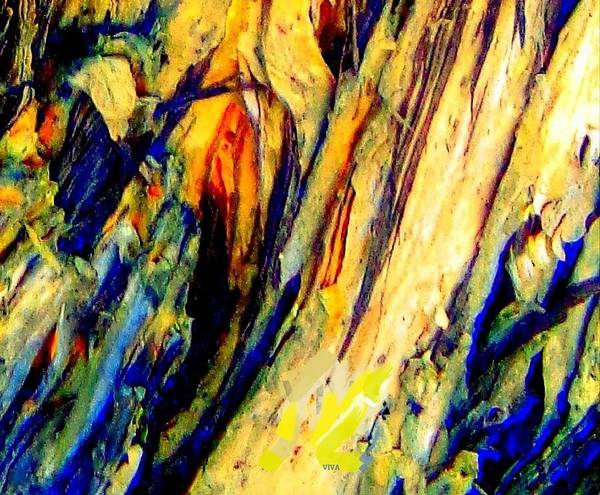 Photograph - Tree Bark 2 Contest Detail 1 by VIVA Anderson