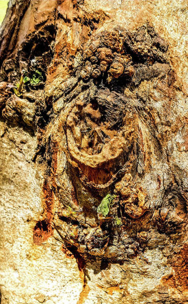 Photograph - Tree Bark by AE collections