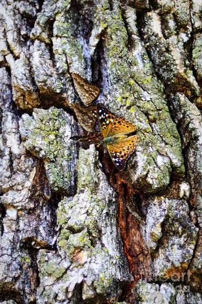 Photograph - Tree Bark Butterflies by Patti Whitten