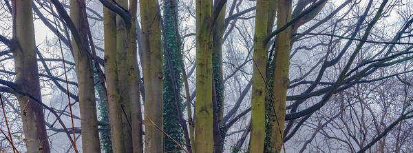 Wall Art - Photograph - Tree Branches And Fog by Kurt Pacaud