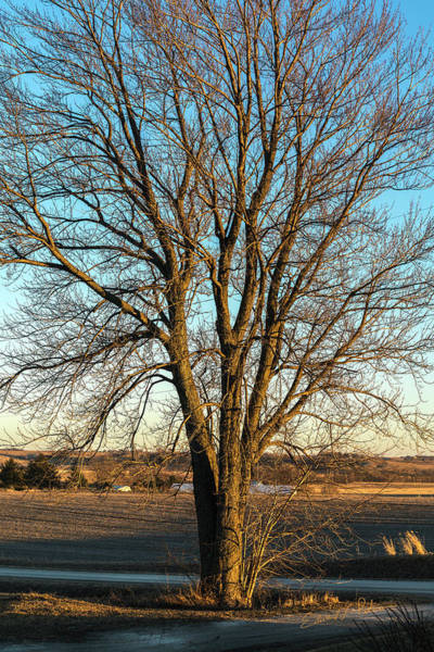 Photograph - Tree by Edward Peterson