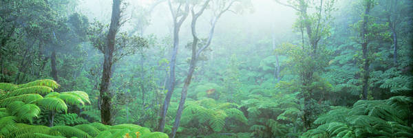 Thicket Photograph - Tree Fern Ohia Forest Hawaii Volcanos by Panoramic Images