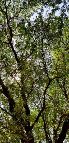 Photograph - Tree Foliage1 by AE collections