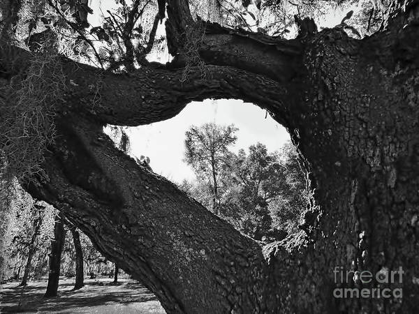 Photograph - Tree Frame by D Hackett