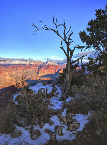 Photograph - Tree Frames The Grand Canyon by Chance Kafka