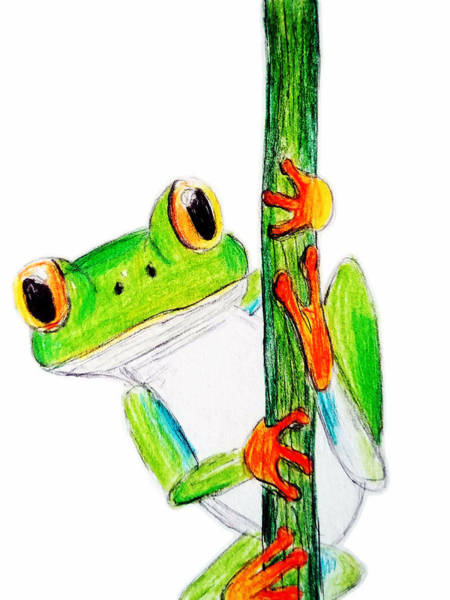 Drawing - Tree Frog Sketch by Luke Mitchell