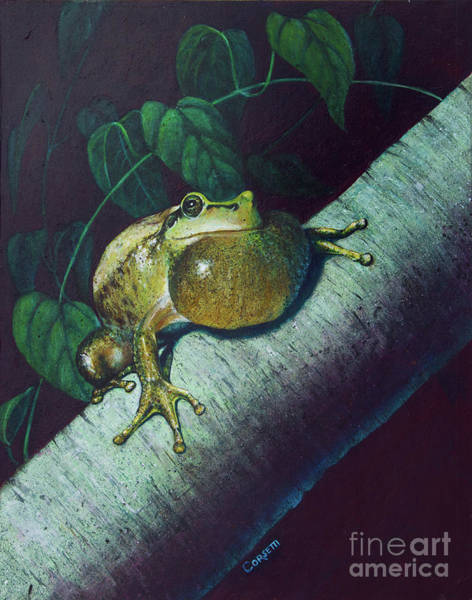 Wall Art - Painting - Tree Frog by Rob Corsetti