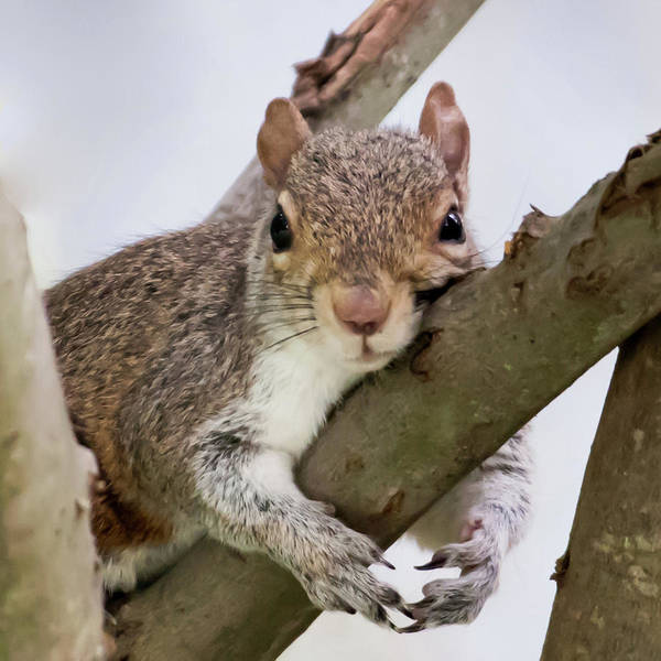 Photograph - Tree Hugger Squirrel by Terry DeLuco