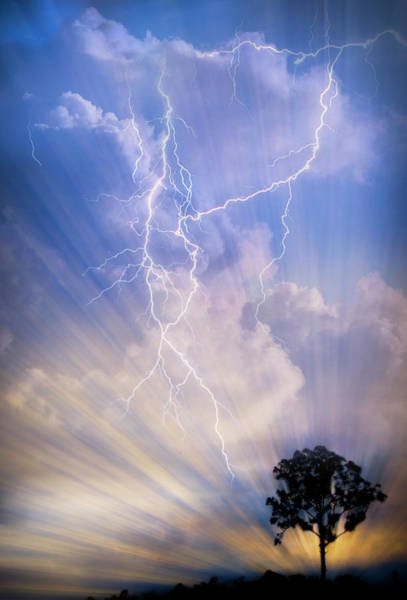 Stormcloud Photograph - Tree In A Lightning Storm by Debra and Dave Vanderlaan