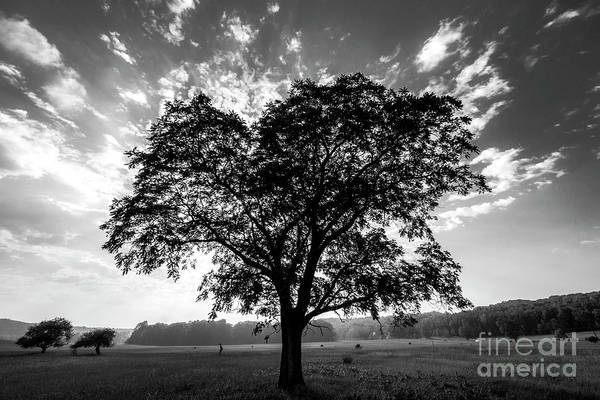 Wall Art - Photograph - Tree In Black And White In Sleeping Bear Dunes by Twenty Two North Photography