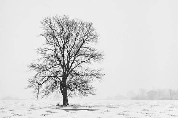 Photograph - Tree In Blizzard I by Denise Bush
