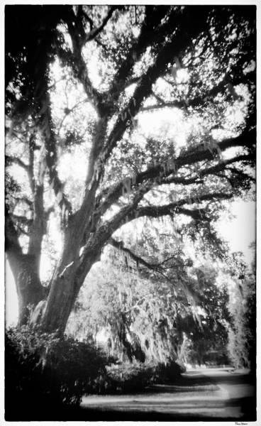 Photograph - Tree In Florida by Rudy Umans