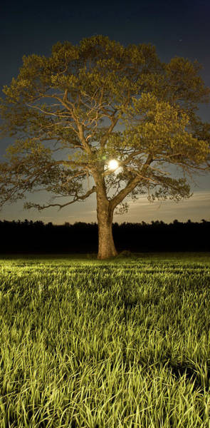 Wall Art - Photograph - Tree In Moonlight by Shaunl