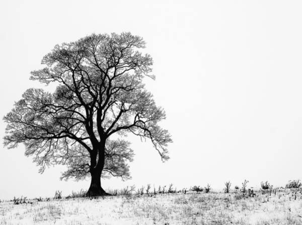 Sunny Photograph - Tree In Snow by Shelly Chapman